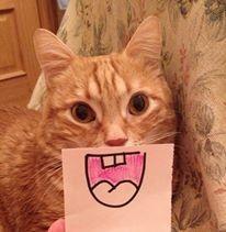 El gatito de Pilar. #TopPet 2013: Vótalo o participa tú también: https://basicfront.easypromosapp.com/p/122526