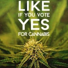 Awesome! Do you support the legalization of cannabis? CTU sure does!