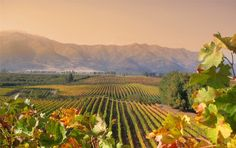 http://intoxreport.com/2013/08/11/from-the-halls-of-montes-uvas/