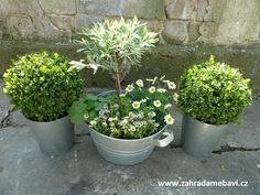 Mini English garden Window Sill, Garden Pots, English, Gardening, Mini, Plants, Garten, English Language, Lawn And Garden