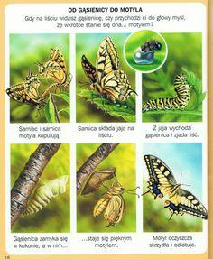 Animal Activities, Preschool Activities, Aga, Animals For Kids, Nature, Geography, Life Cycles, Naturaleza, Montessori Activities