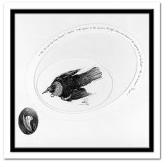 Tui flax flower pencil illustration on gesso primed fine art paper. There are many reasons why I find Tui appealing. Sketches, Fine Art, Fine Art Paper, Drawings, Image, Illustration Art, Art, Pictures, Pencil Illustration