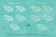 When naming your new frog or toad, think about a unique, funny, or meaningful name that lasts. Some of these amphibians can live up to 20 years. Silly Names, Pet Names, Cool Names, Frog Or Toad, Mr Toad, Turtle Names, Pet Frogs, Meaningful Names, Amphibians
