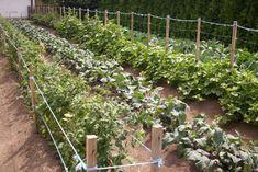 Mittleiderova metóda úzkych záhonov pre pestovanie zeleniny 2/3 - OZ Biosféra