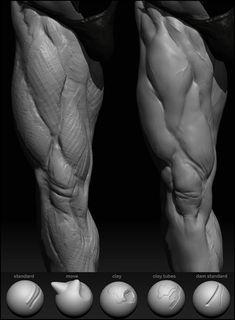 sculpting anatomy ref Zbrush Anatomy, Leg Anatomy, Anatomy Poses, Muscle Anatomy, Anatomy Sketches, Anatomy Drawing, Anatomy Art, Human Anatomy, Leg Reference