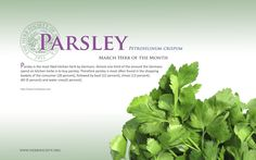 http://www.herbsociety.org/_new/images/parsleywallpaper.png