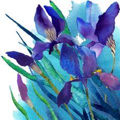 Rachel Mcnaughton - irises1.jpg