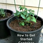 How to Get Started Container Gardening