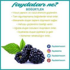 #bogurtlen #böğürtlen #böğürtleninfaydalari #Blackberry