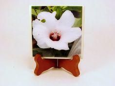 Handmade Photo Coaster Hibiscus Flower 0080C by PhotographyByRoger on Etsy