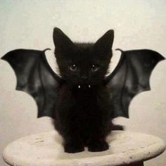 El hijo de Batman y Catwoman