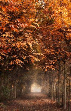 Fall scene.  By Alessandro Guerani.