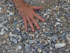Shelling tips for Myrtle Beach inclu. link to Tide forecast.   ...Wally May, 2014 sifting sand for shells