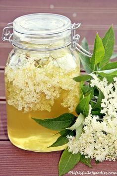 Great Absolutely Free Elderflower Syrup - Life Is Full Of Goodies Thoughts Whether steamy breakfast Drink or fruity refreshment among – Smoothies just always go. Cocktail Drinks, Fun Drinks, Yummy Drinks, Cocktail Recipes, Cocktails, Elderberry Bush, Elderberry Syrup, Kombucha, Elderflower
