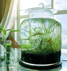 vase ou pot en verre avec couvercle pour planter plante aquatique immergée