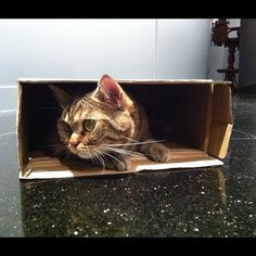 Tough Economy Forces Kitten to Downsize to Smaller Box