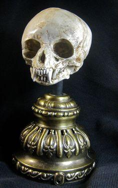 Fetal Werewolf Skull Display. $60.00, via Etsy.