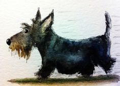 "wasbella102: "" Archy the Scottie Dog on the Move by archyscottie """