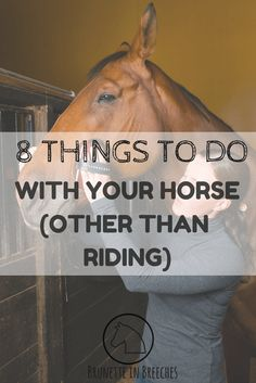 8 things to do with your horse other than riding