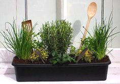 Herbs that grow well together:  -basil, cilantro, tarragon, parsley (moisture loving)  -chives, oregano, sage, rosemary, thyme, bay, marjoram, lavender (prefer dry conditions)