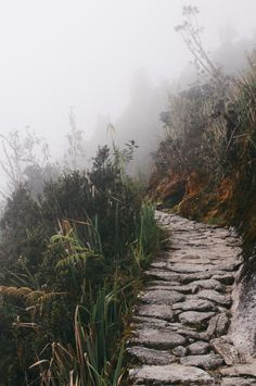 Stone trail path lined by tall gray foliage in Peru Rock Pathway, Anatole France, Beginner Yoga, Yoga Beginners, Best Rock, Landscaping With Rocks, Yoga For Weight Loss, Medicinal Plants, Natural Home Remedies