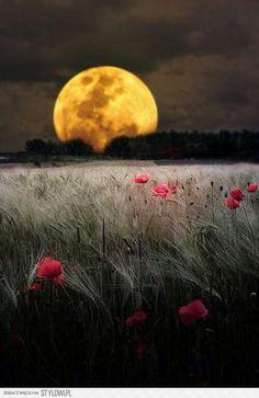 L'Europe au grand complet ♡ lune et coquelicots, j'adore !!!