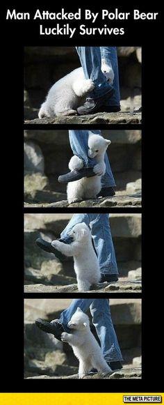 Man Survives Polar Bear Attack