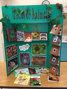 16 Best Tri Fold Poster Board Ideas Images School Projects Tri