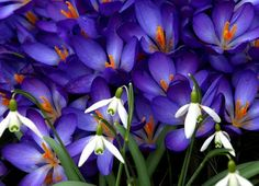 Flowers pic | Flowers Plants Trees Gardening photos