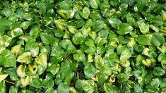 Las plantas toman el dióxido de carbono y liberan oxígeno; todos sabemos esto desde la escuela primaria. Sin embargo, algunas plantas en realidad pueden hacer mucho más, como purificar el aire de su hogar. Toxinas como el polvo y productos químicos pueden permanecer en el aire del hogar. Así que pruebe con estas plantas, no sólo para hacer que su lugar se vea mejor, si no que se respire mejor también. Plantas para la purificación del aire 1. Aloe vera Conocido sobre todo por sus propiedades…