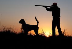 Northwoods Bird Dogs…New Photos…New Website in the Works Hunting Art, Hunting Dogs, Hunting Pictures, Sunflower Wallpaper, Shooting Guns, Senior Pictures Boys, Draw On Photos, Silhouette Art, Shotguns