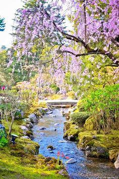 Beautiful Japanese garden in spring, Japan.