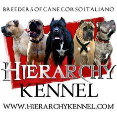 AJC Classifieds: AJC Pets/Dogs  Cane Corso