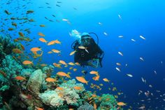 Scuba diving gives you the chance to see beautiful underwater sights.