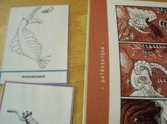 carte - grande leçon 2 - Montessori - faune et flore du cambrien