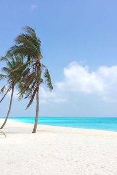Palmen, Strand & Meer auf Hondaafushi, Malediven / Maldives. Lies mehr dazu auf meinem Reiseblog: Malediven - Traumziel für Flitterwochen & Luxusurlaub