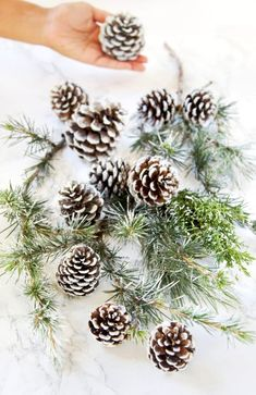 3 minute gorgeous DIY snow covered pine cones & branches in 3 ways! Easy pinecone craft for winter weddings, farmhouse, Thanksgiving, Christmas decorations! - A Piece of Rainbow Christmas Pine Cones, Christmas Mason Jars, Pot Mason Diy, Mason Jar Crafts, Pine Cone Decorations, Christmas Table Decorations, Christmas Gift Wrapping, Diy Christmas Gifts, Pine Cone Crafts