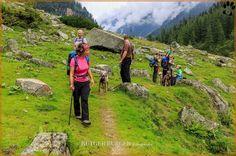 www.dogwalktrail.com oostenrijk zomervakantie met de hond Zell Am See, Mountains, Nature, Travel, Instagram, Kaprun, Naturaleza, Viajes, Destinations