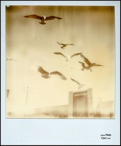 Polaroid, Impossible Project paper