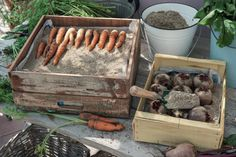 Store vegetables correctly-Gemüse richtig lagern Carrots and beetroot - Clean Out, Diy Jardin, Types Of Vegetables, Store Vegetables, Root Veggies, Gardening Vegetables, Hydrangea Care, Palmiers, Pallets Garden