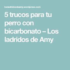 5 trucos para tu perro con bicarbonato – Los ladridos de Amy Pitbulls, Kitty, Amy, Dogs, Pet Clothes, Dog Beds, Pictures Of Dogs, Animals And Pets, Baking Soda