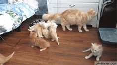 Mother cat panics her litter of kittens in jump fail | Gif Finder – Find and Share funny animated gifs