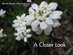 """Do you recognize the flowers in these """"up close and personal"""" photos?"""
