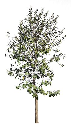 Just Trees is a wholesale tree nursery and we supply specimen container grown trees to the trade throught South Africa.