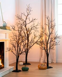 Set the scene for spooky nights and Halloween frights. Get your living spaces and entryways into the spirit with a combination of trees for a fun display. Tree Decorations, Halloween Decorations, Christmas Decorations, Orange Led Lights, Fall Decor, Seasonal Decor, Slim Tree, Balsam Hill, Realistic Christmas Trees