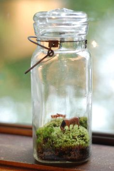 Found an old mason jar in the cellar today.  Plan to do a  terrarium with my son. :-)