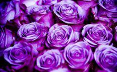 светлые оттенки фиолетового