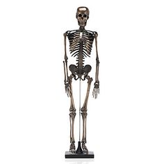 Faux Bronze Skeleton | Objects of Art | Decorative Accessories | Accessories | Decor | Z Gallerie