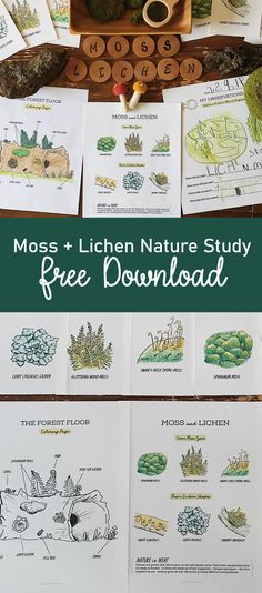Outdoor Learning, Home Learning, Learning Spanish, Nature Activities, Learning Activities, Science Nature, Homeschool Curriculum, Homeschooling, Forest School