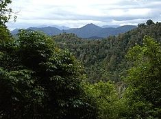 Te Urewera (protected area) - Wikipedia Map Of New Zealand, New Zealand North, Maori Tribe, Natural Resources, New Age, Homeland, Forests, East Coast